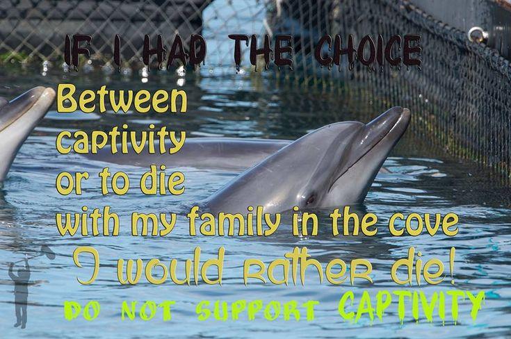The Last Hug, a very powerful video on captivity. https://www.youtube.com/watch?#Dolphins v=JaeR8KDtdBE#t=180… #Seaworld #tweet4taiji