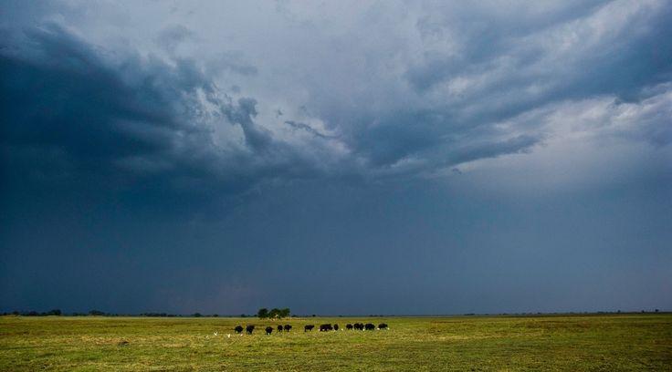 ©Wilderness Safaris | Zambia