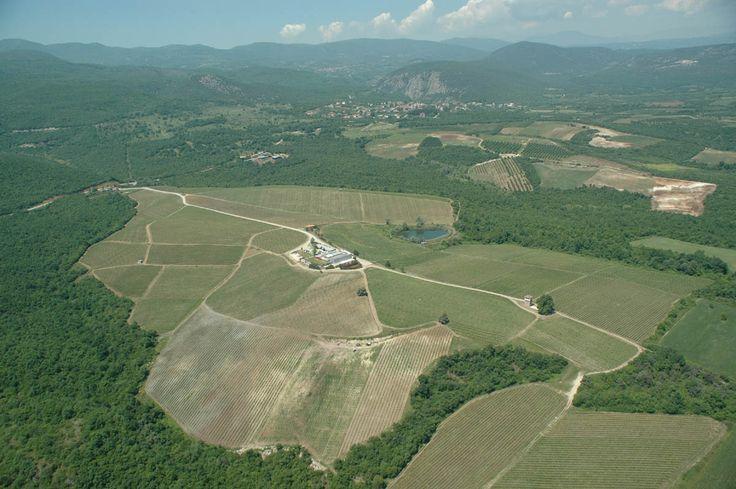 KIR-YIANNI, Imathia, Greece, Vineyards