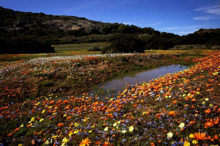 Namaqualand farm