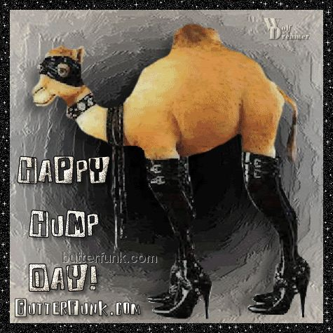 Happy Hump Day Camel | Hump day camel - Graphic Image and Hump day camel Picture Art Page 2