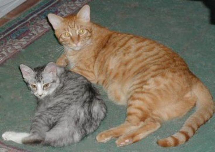 New Kitten With Older Cat