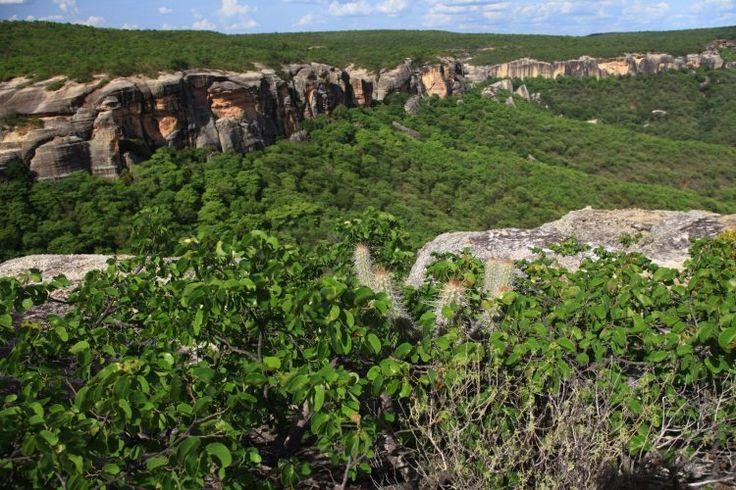 28 de Abril - Dia da Caatinga e da educação.🌎 Neste dia, além de lembrarmos a importância da Caatinga para a conservação da biodiversidade brasileira, aproveitamos também para salientar a relevância da conscientização na busca pela preservação ambiental. Educação é tudo! ✌