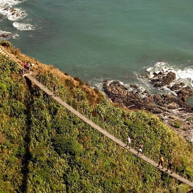 Swing bridge awesomeness along the Paekakariki Escarpment Track on the Kapiti Coast. Photo: Don Herron