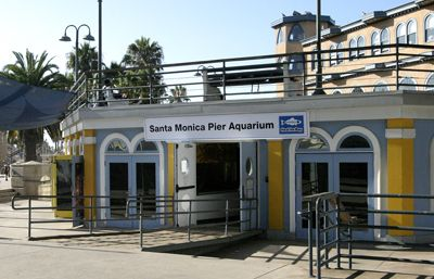 Happy Birthday, Santa Monica Pier Aquarium! « Santa Monica