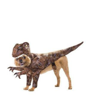 Animal Planet Raptor Costume | Don't forget about your furry friend this Halloween. As though your dog or cat isn't cute enough already, just picture him or her in one of these cute Halloween costumes. Whether your pet is greeting trick-or-treaters and party guests, or heading to the neighborhood costume parade, dress them in some unique costume ideas. If everyone in your family is dressing up, don't leave them out—especially when there are so many fun opportunities.