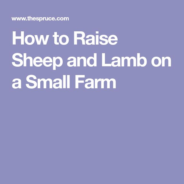 How to Raise Sheep and Lamb on a Small Farm