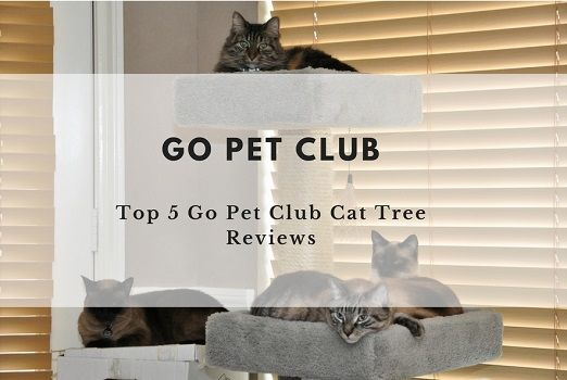 Which is the best Go Pet Club cat tree? Read our review of 5 top rated cat trees in the wonderful Go Pet Club cat tree range.