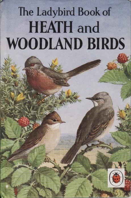 .heath and woodland birds ladybird