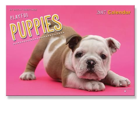 2017 Calendar - Puppies - School Depot NZ  - 1