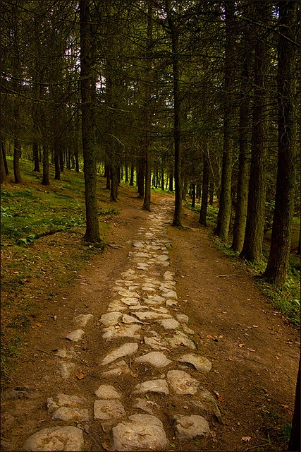 A pathway leading through the forestry on the waterfall trail, Ystradfellte, Wales.