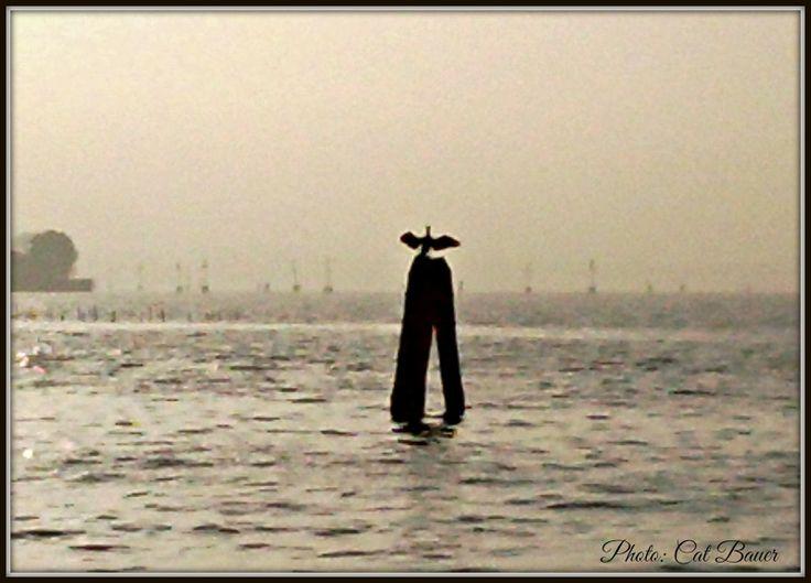 "Venice Lagoon Bird Strikes ""La Fenice"" Pose"