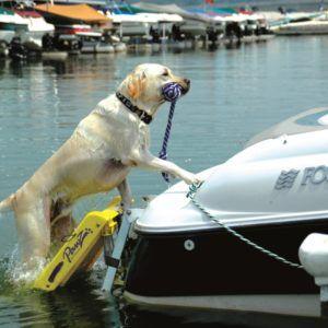 Dog boat ladder