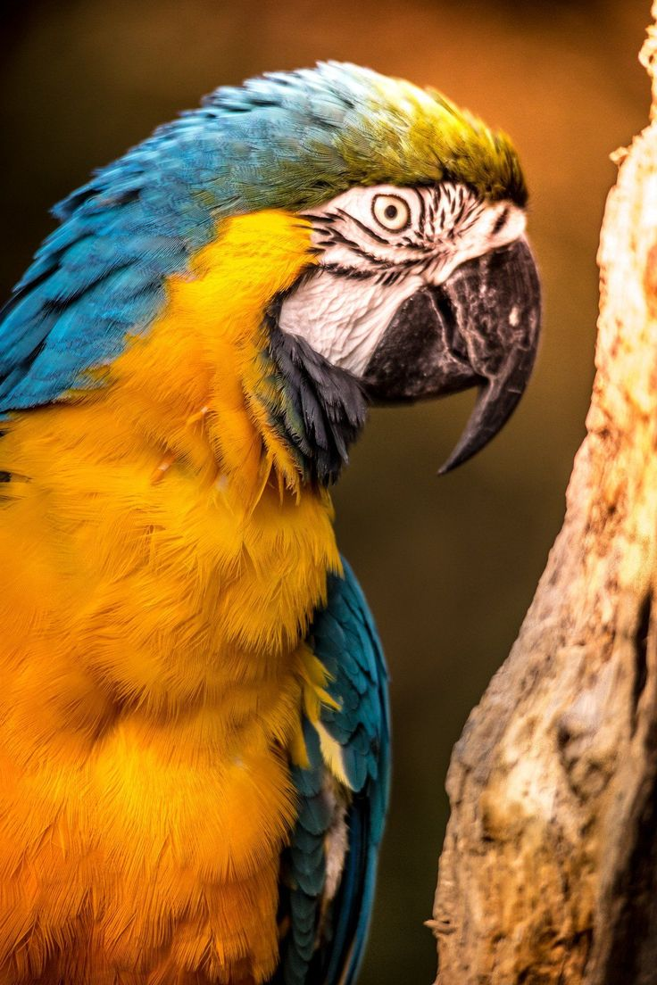Save Endangered Parrot Species From Extinction