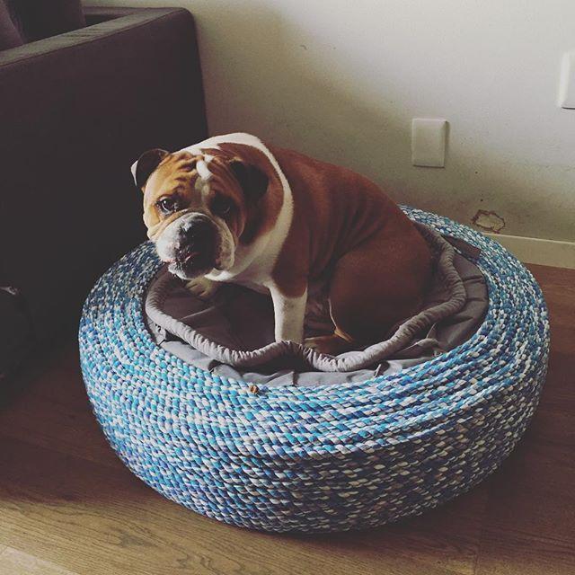 Cama de perro para talla mediana de #AYOK ... Se llama #cocada  Y su modelo es una chulada!