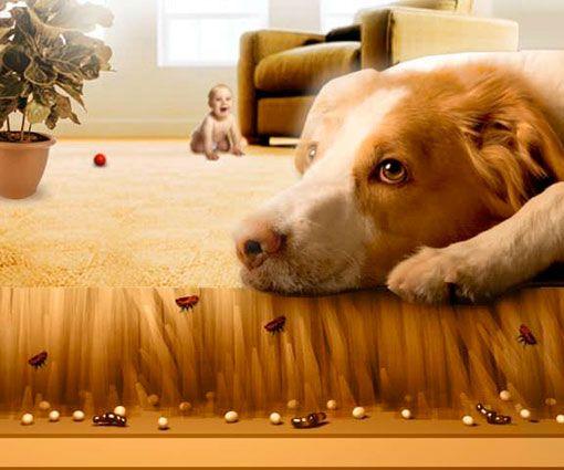 Блохи в квартире Жила - была на собаке блоха. Питаться ей было сложно. Собачья шерсть настолько длинная и густая, что для обеда приходилось тратить сутки, чтобы высосать кровь. К тому же, у собаки острые зубы. Только уколет, как пес сразу ее кусал. Короче говоря, тяжелым трудом питалась. Однажды, пес пробрался в дом своих хозяев. Блоха, зашла вместе с жертвой, там увидела белоснежную шкурку, лежащую на полу. Она настолько пришлась по душе, что та с разгона прыгнула на шкурку. Блоха прыгала…