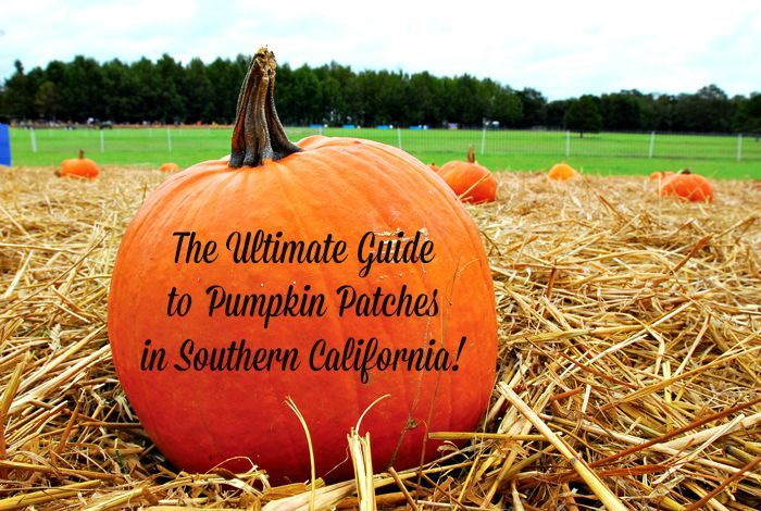 The Ultimate Guide to Pumpkin Patches in Southern California!  50+ pumpkin patches to choose from throughout Riverside, Orange County, LA County, Ventura, Long Beach, Santa Barbara and San Diego.