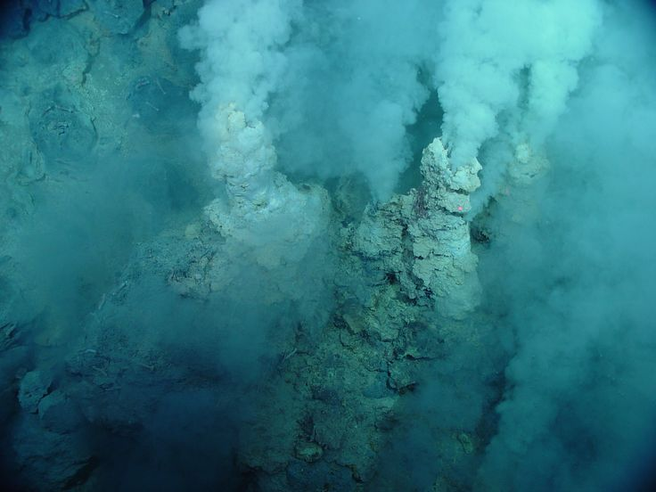Ученые сделали удивительное открытие в Марианской впадине
