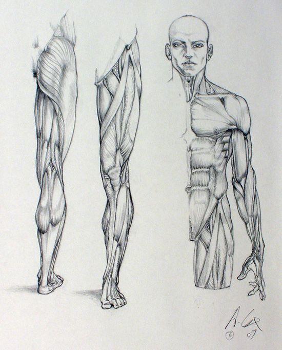 anatomy 01 by andrewcox on DeviantArt via cgpin.com                                                                                                                                                                                 More