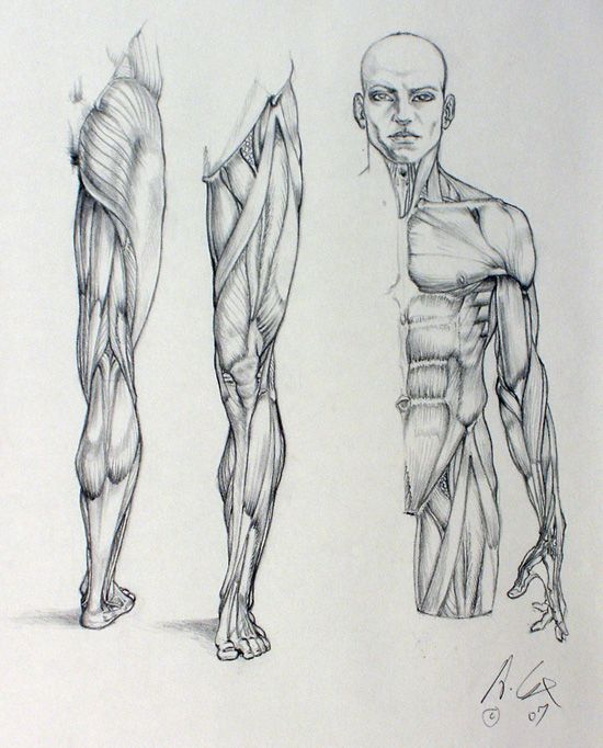 anatomy 01 by andrewcox on DeviantArt via cgpin.com