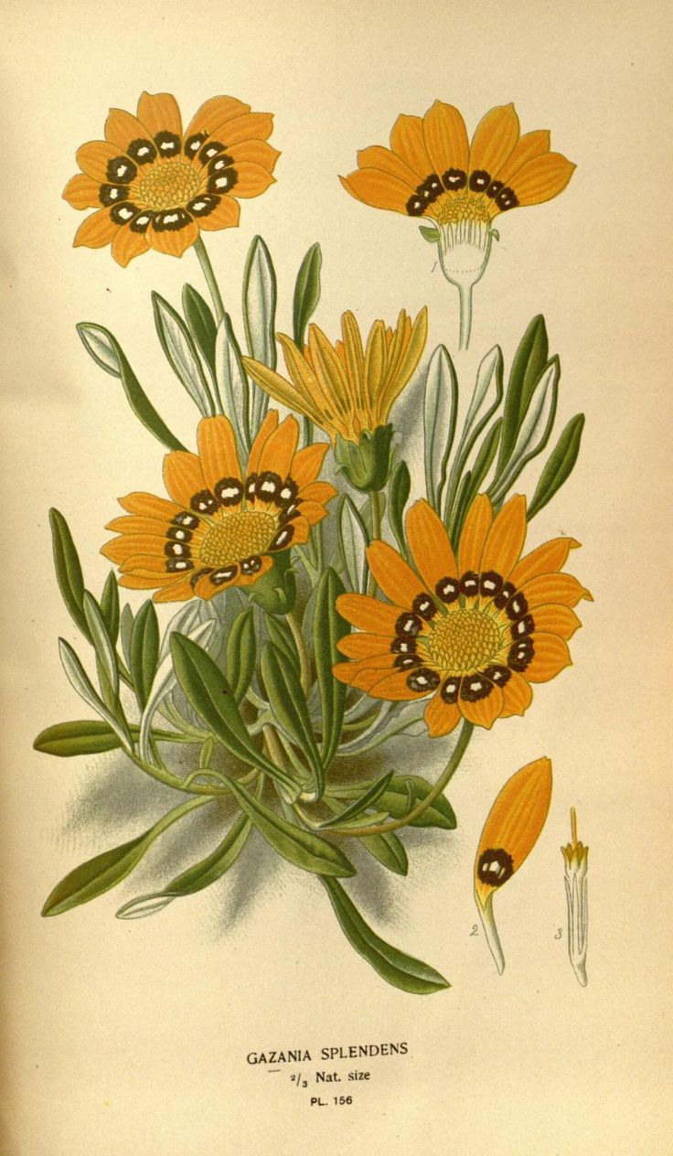 v. 2 - Favourite flowers of garden and greenhouse / - Biodiversity Heritage…