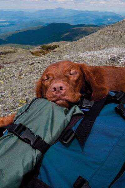 Tips for Camping with Your Dog in National Parks By: Tracie Hotchner Camping with your dog in a National Park can be fun and easy, with a little preparation. Planning your first family camping adventure at one of the United States' national parks? Maybe you're a seasoned pro but this will be your first time bringing along a pet. In any event, to ensure a fun, safe visit for the whole family, follow these tips for taking your dog camping in national parks.Read More »