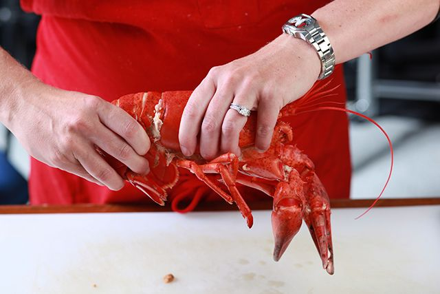 A recipe for lobster simply steamed and served with melted butter.