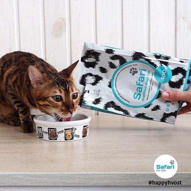 Safari Sterilized for Adult Cat. Повседневный корм для кастрированных котов и стерилизованных кошек: - Поддерживает здоровье мочевыделительной системы - Помогает сохранить мышечную массу животного - Способствует поддержанию оптимального веса тела - Таурин для остроты зрения и здоровья сердца - Содержит полезные фитокомпоненты Узнай подробнее о корме Safari @happy.hvost или на сайте http://ift.tt/2f4NIUw (ссылка в описании профиля)