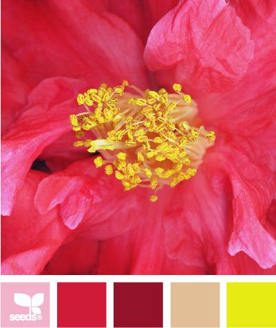 flora brightFlora Bright, Design Seeds, Colors Combinations, Colors Palettes, Offices Colors, Colors Schemes, Colours Palettes, Colors Boards, Bright Colors