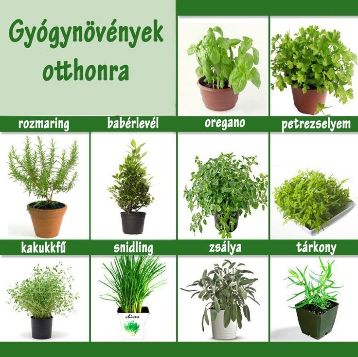 Gyógynövények otthonra | Socialhealth