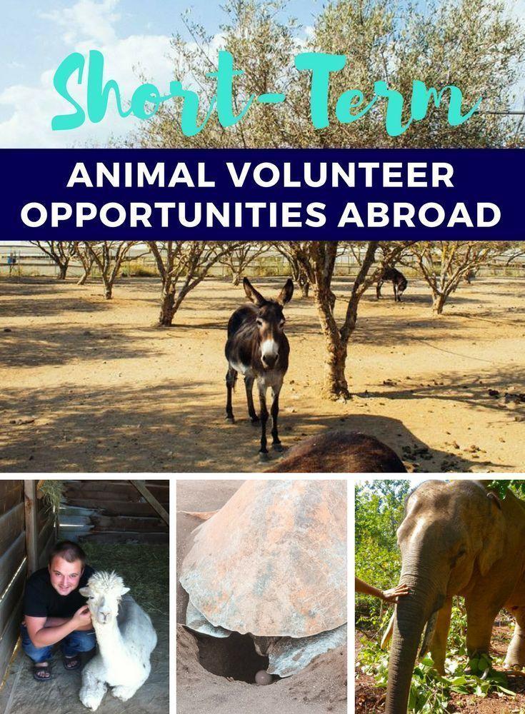 Short Term Animal Volunteer Opportunities Abroad In 2020 Volunteer Travel Volunteer Opportunities Volunteer Opportunities Abroad