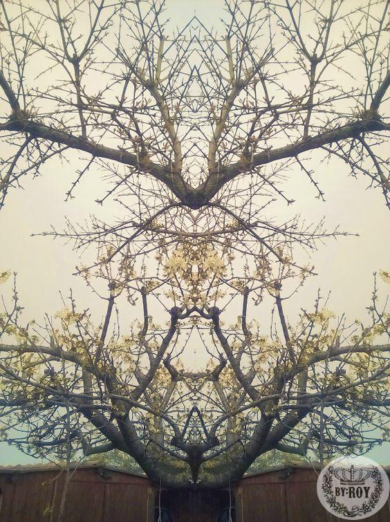 Cherry Blossoms~ Cigliegio in Fiore~
