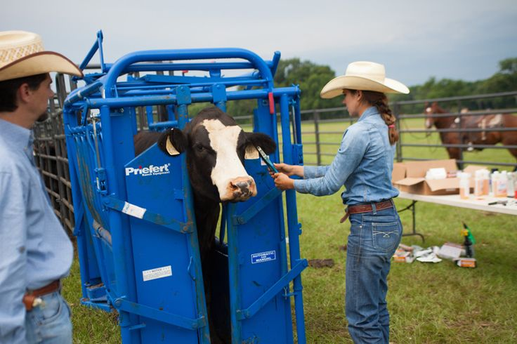 The Model 91 headgate is our most popular headgate.  No other product invented by the Priefert family has had more of an impact on the cattle industry.