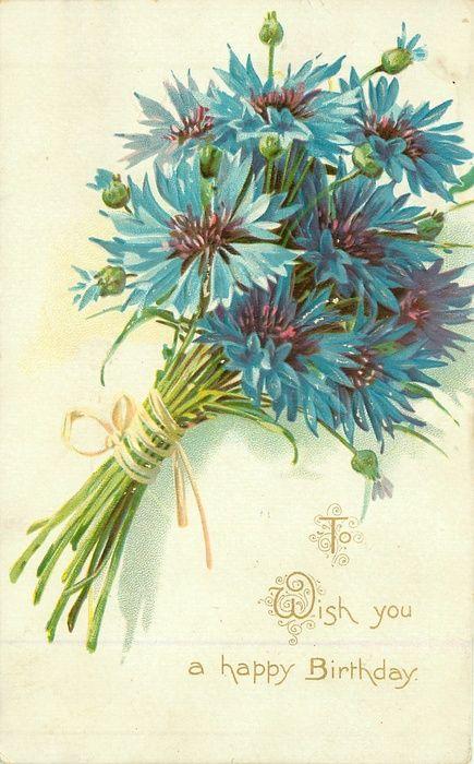 Bundle of blue bachelor buttons, 1909.