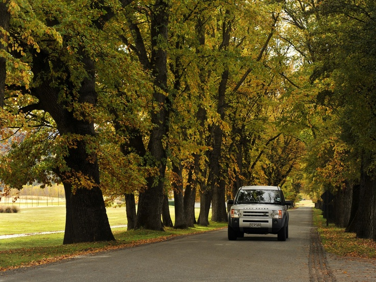 The stunning Millbrook Avenue of Trees in Autumn