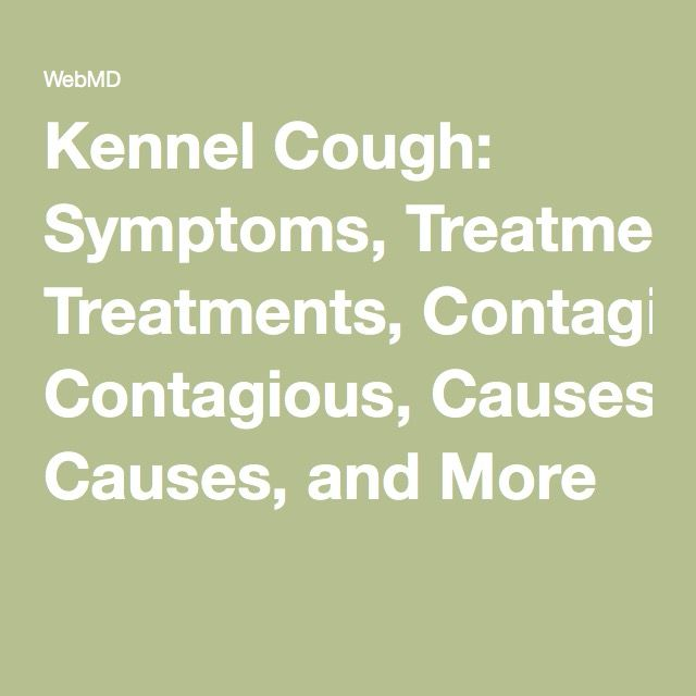 Kennel Cough: Symptoms, Treatments, Contagious, Causes, and More