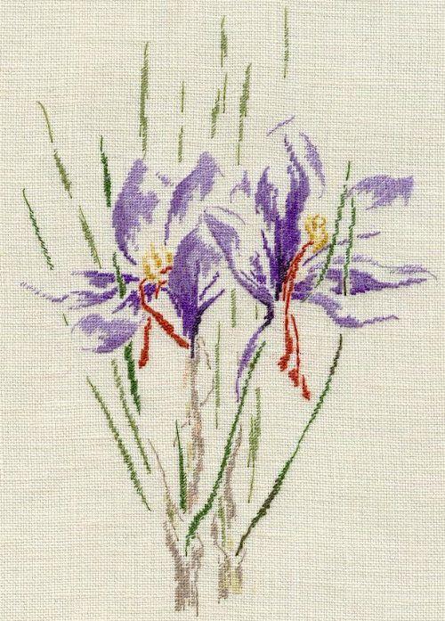 Fleurs de Safran/