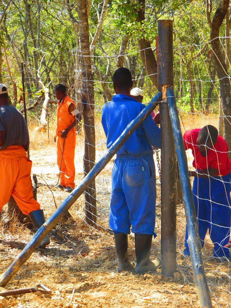 Building wildlife fencing