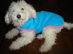 ropa para perros, ropa para perros pequeños, ropa para perros grandes, ropa para perros salchichas, ropa para perros caniches