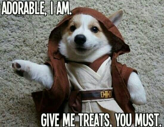 Oh yes!!!! I will give ALL the treats!!!