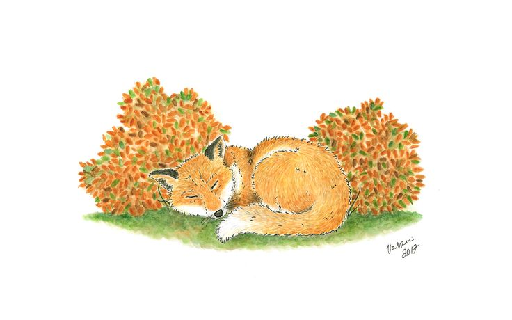 Sleepyhead fox aquarelle. Tools used Winsor & Newton watercolors and Staedtler pigment liners