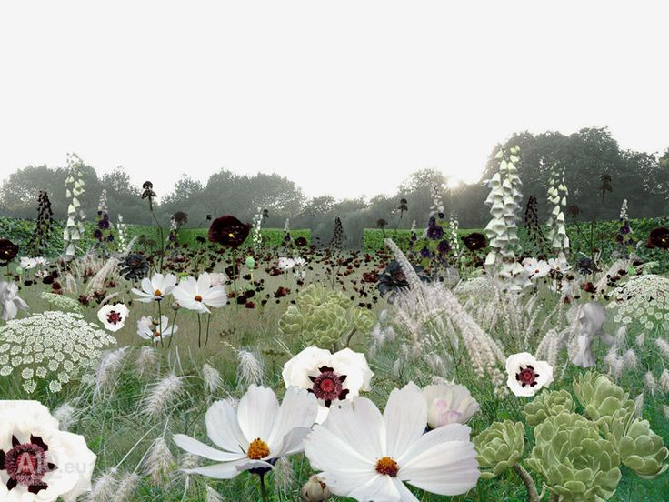 Incredible white and black perennial contrast!!Anouk Vogel Garden of Escher, Chaumont-sur-Loire