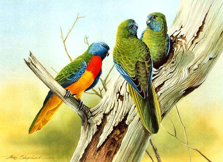 Premise Indicator Words: Scarlet-chested Parrot ~ Eric Shepherd