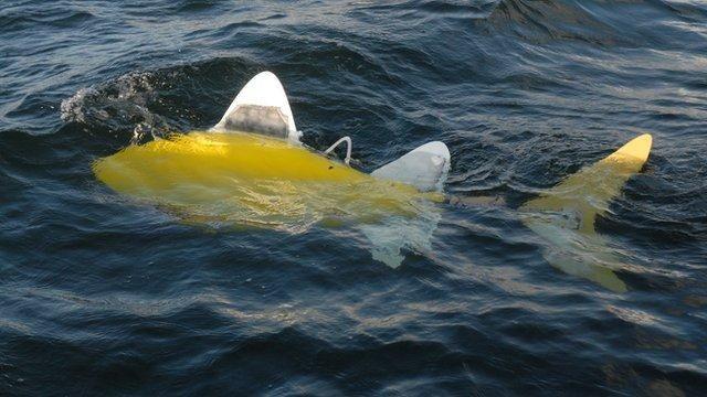 SHOAL, el pez-robot que medirá la contaminación del mar Con este diseño puede perfectamente pasar desapercibido, cuando de infractores se trate. El dispositivo puede analizar a modo de laboratorio, las aguas de determinado sector, en tiempo real.