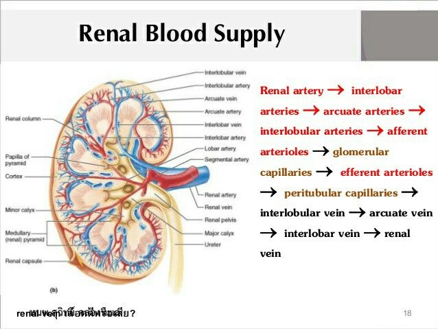 An analysis of urine information in renal vein