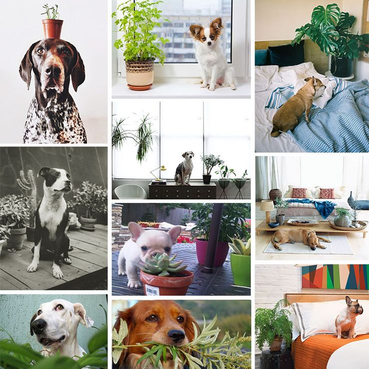 21 Best Images About Pet Friendly Plants On Pinterest