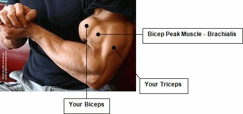 How To Get Bigger Arms | Your Resource To Get Bigger Biceps & Triceps