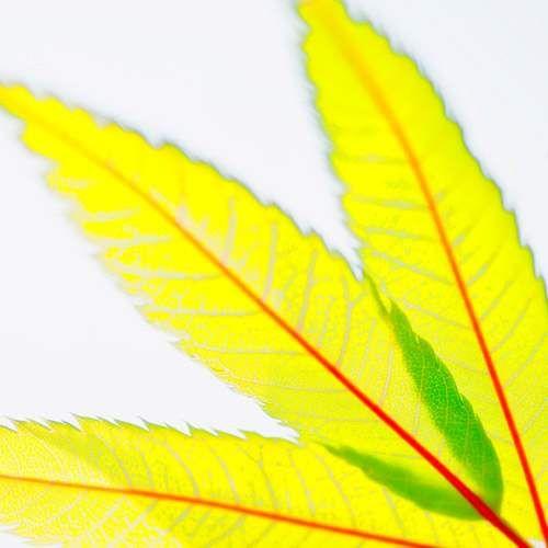 modern leaf 143sq yellow
