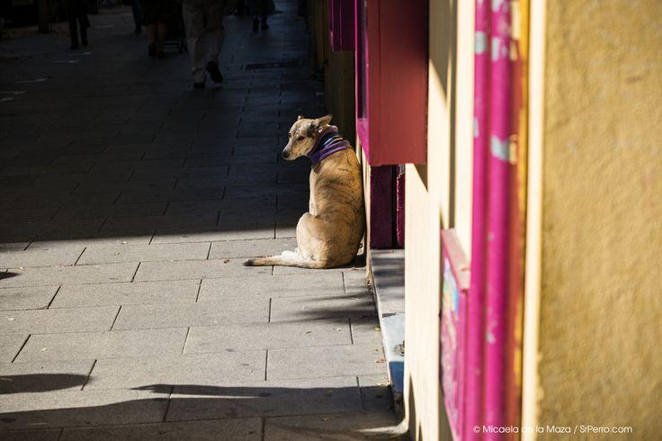 Dog waiting, Madrid, Lavapiés.
