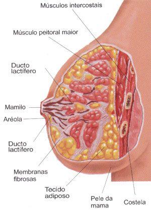 Corpo Feminino So Biologia Corpo Humano Corpo Musculo